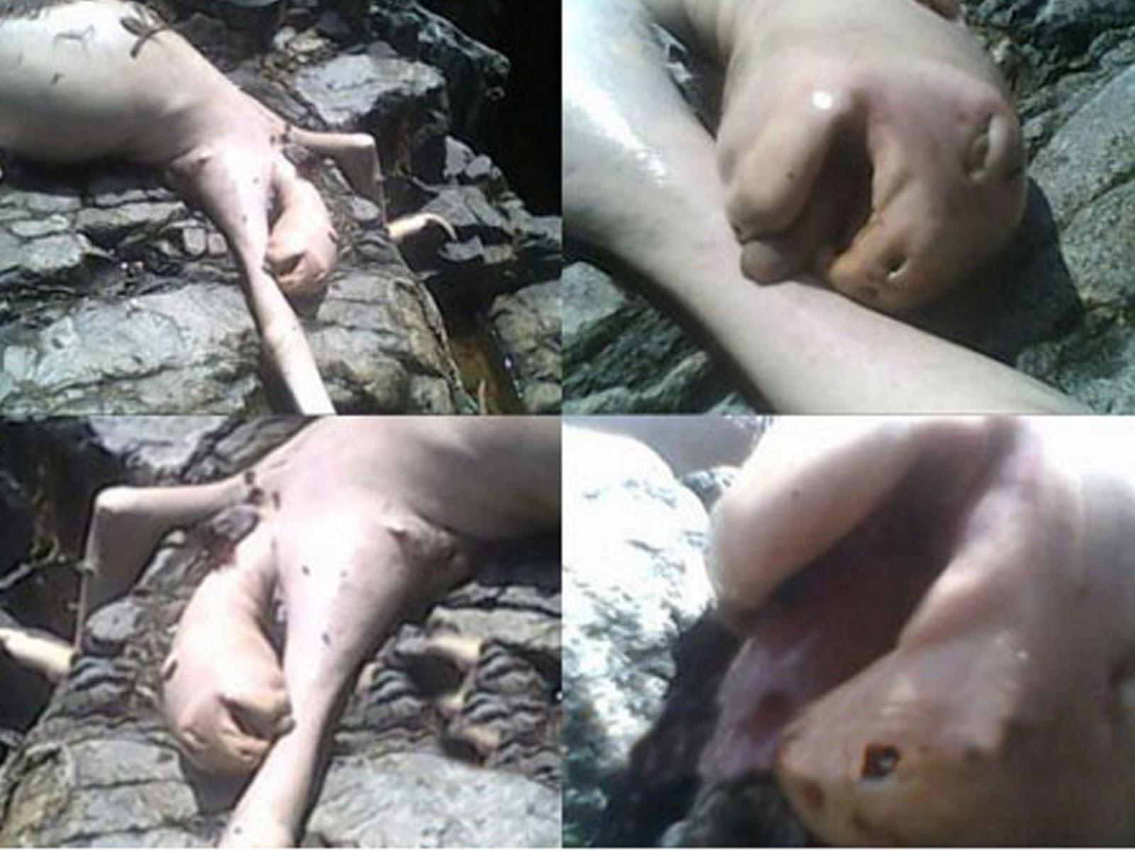 Videos of monstres killing women naked photo